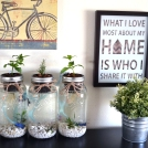 Wanting to fill my home with living greens